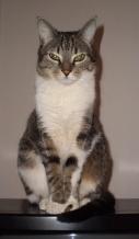 Minnie my cat