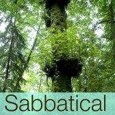 sabbatical2