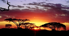 African sunset - Copy